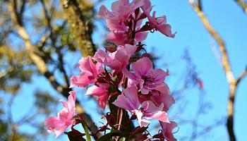 В двух скверах Новосибирска высадят 20 декоративных яблонь