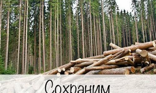 Сохранить лес в Новосибирске призывают активисты-экологи