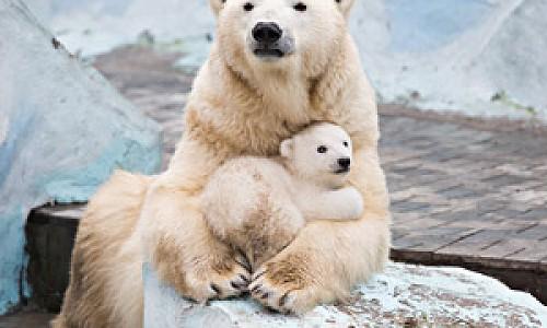 Зоопарк в Новосибирске продлил бесплатный вход для пенсионеров