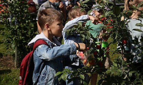 Урожай яблок и клумбы во дворах: новосибирские ТОСы подводят итоги летнего сезона