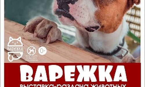 Выбери питомца на выставке-раздаче «Варежка» в Новосибирске