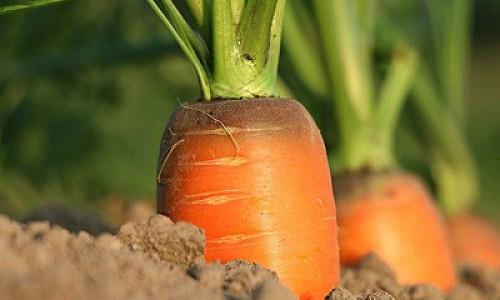 """""""Дорогая морковь? - Покупайте устрицы, мидии, кальмары..."""""""