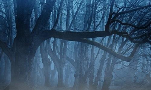 """Круче чем ""Туман"". Стивен Кинг посвятит новую книгу COVID-19"