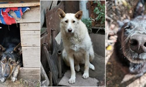 """""""Готовы стоять на коленях"""". Приют для собак сносят в Новосибирске"""