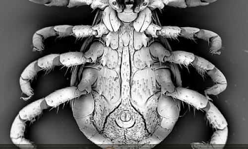 Миниатюрные шедевры создает новосибирский ученый Владимир Анискин