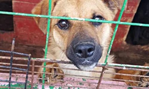 Бездомных животных пересчитают в Новосибирске